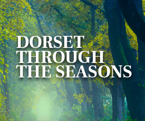 Dorset Through the Seasons